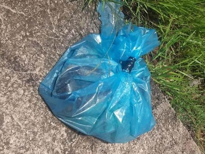Cachorro é morto e colocado dentro de saco plástico no Jardim Paulista, em São Carlos, SP