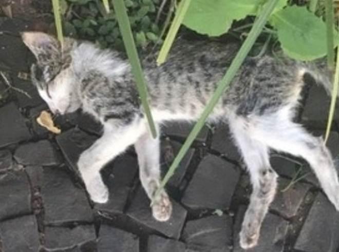 Mais um envenenamento: Gato é encontrado morto no Centro de São Carlos, SP