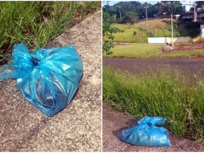 Mortes de 10 cachorros em 14 dias assustam moradores em São Carlos, SP