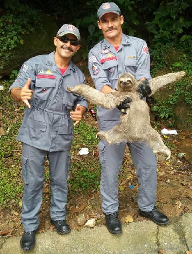 Bicho-preguiça é encontrado dentro de pousada em São Sebastião, SP