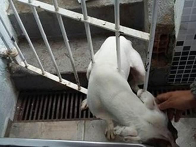 Bombeiros resgatam cão preso nas grades de portão em São Sebastião, SP