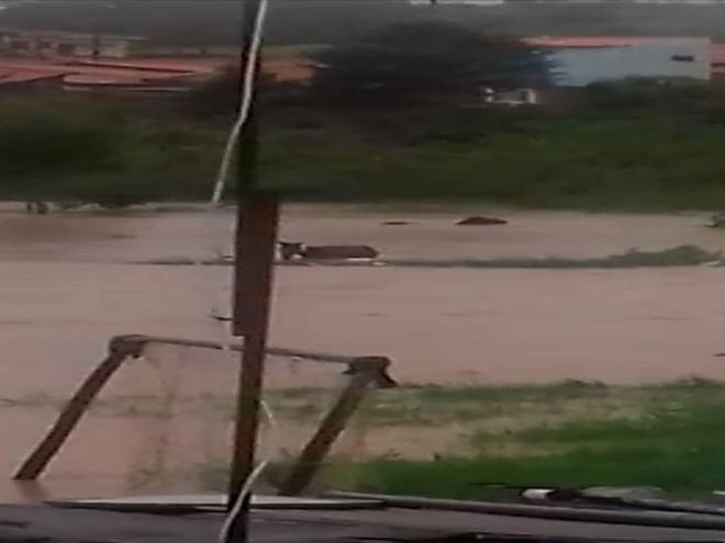 Cavalos ficam quase submersos durante temporal em Sorocaba (SP); vídeo