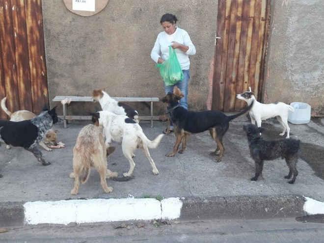 10 cachorros são envenenados com chumbinho e 4 morrem em Tambaú, SP