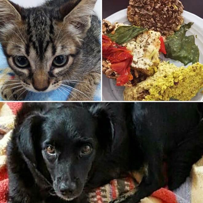 Bazar e alimentação vegana para ajudar os animais em São Paulo