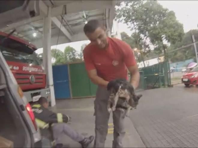 Gatos viajam 400 km em motor de carro e bombeiros buscam tutor; veja