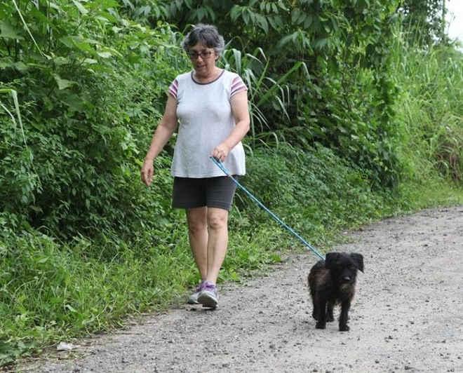 Veja como ajudar cães abandonados em Santos (SP) se tornando um 'passeador' voluntário