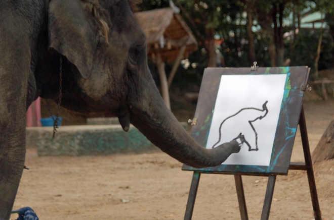 Os 'elefantes pintores' e a imbecilidade humana