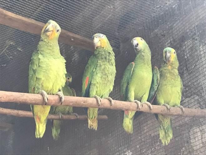 Em dois meses, mais de 20 animais silvestres são resgatados no sul do TO