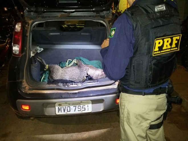 Caçadores são presos pela PRF com armas e animal abatido na BR-153, em TO