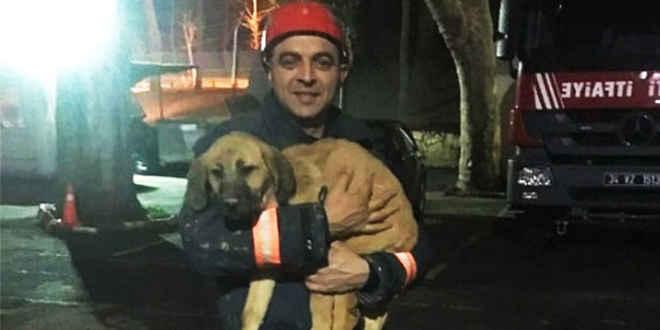 Após ficar 10 dias preso em poço de 200 metros de profundidade, cão é resgatado e adotado por bombeiros