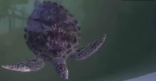 Voluntários salvam milhares de animais na costa da Tailândia; veja