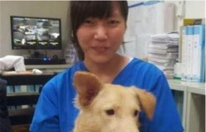 O suicídio da veterinária que mudou a lei da eutanásia de animais em Taiwan
