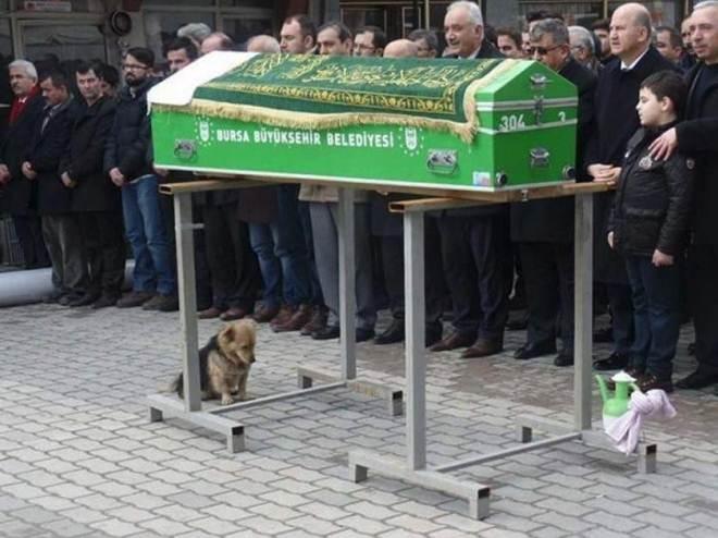 Cachorro acompanha o funeral de tutor e emociona a internet