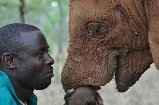 Uma bela foto revela a inegável conexão entre humanos e elefantes