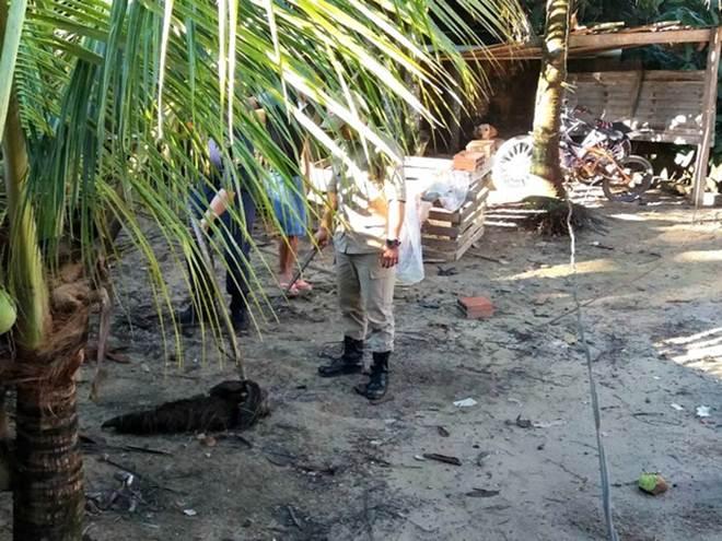 Bombeiros resgatam bicho-preguiça em coqueiro de casa no interior do AC