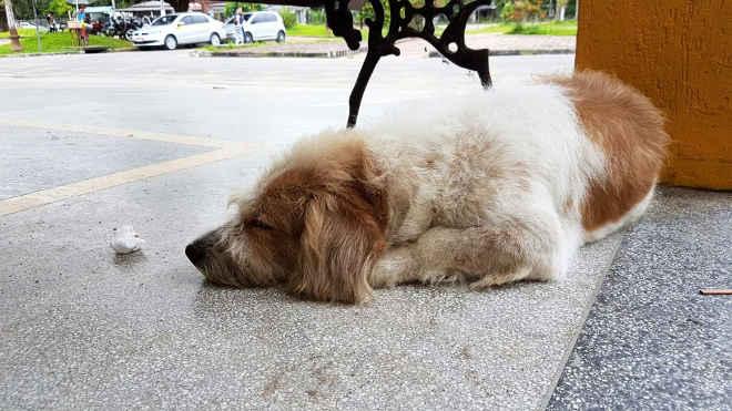 Cão mora na frente de hospital e é 'adotado' por funcionários no AC