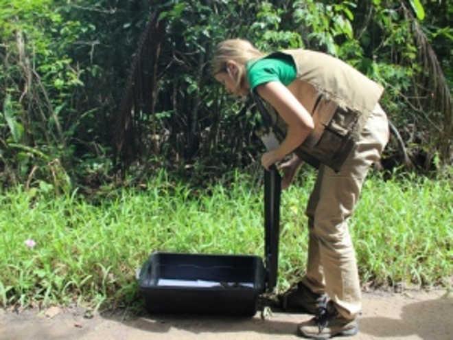 IMA e Ibama realizam soltura de animais silvestres