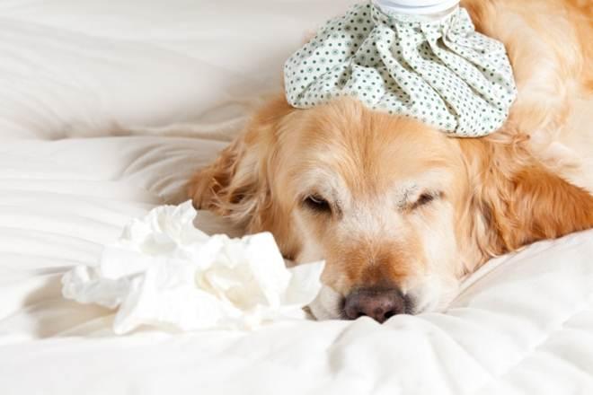 Ar-condicionado pode prejudicar sistema respiratório dos animais de estimação