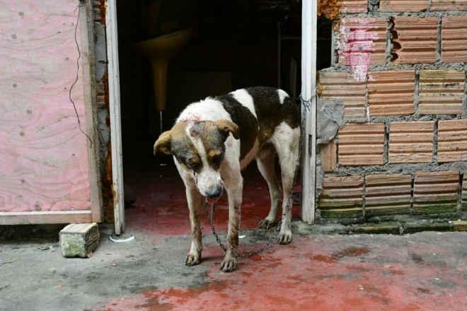Cachorro espancado em Manaus (AM) recebe atendimento veterinário e deve ficar com sequelas