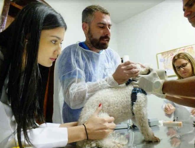 Gratuita, campanha veterinária 'CarnavAU' visa prevenção de DSTs em animais em Manaus, AM