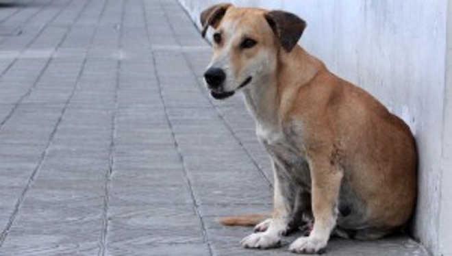 Operação Beethoven identifica maus-tratos a animais em Manaus, AM