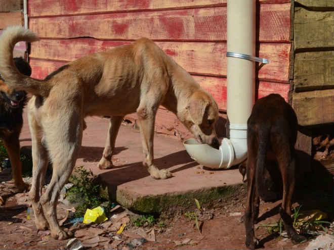 Comedouros públicos para animais de rua são instalados em Macapá, AP
