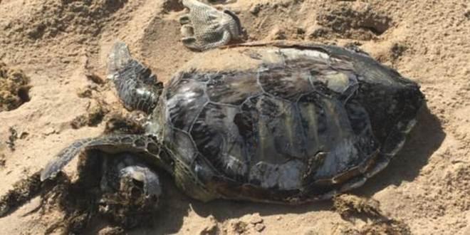 Em praias de Alagoas, 13 animais marinhos são achados mortos durante o Carnaval