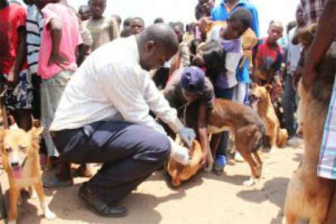 Província do Zaire adia campanha que pretende massacrar cães