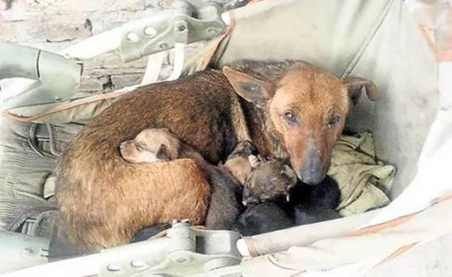 Essa cadelinha salvou um bebê abandonado pela mãe em um frio de matar!