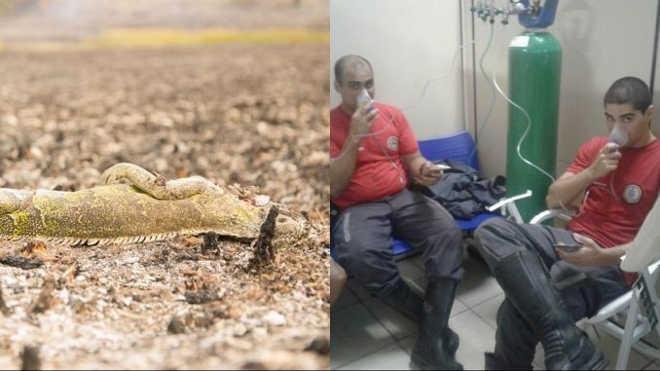 Animais morrem e bombeiros passam mal durante incêndio em Guarajuba, BA