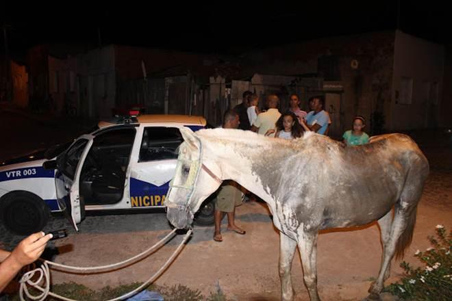 Cavalo que sofria maus-tratos é resgatado por patrulha GCM em Itapetinga, BA