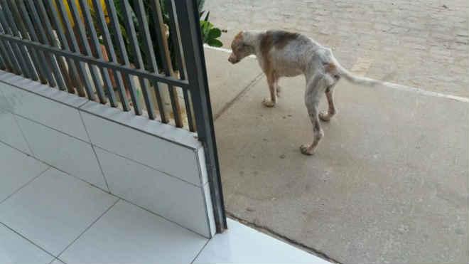 Moradores denunciam maus-tratos a cachorros num residencial em Juazeiro, BA