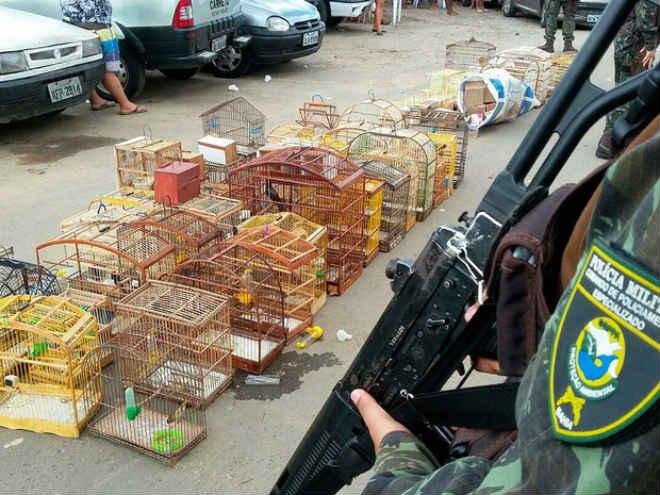 Grupo é preso por crime ambiental e 63 aves são apreendidas na Bahia