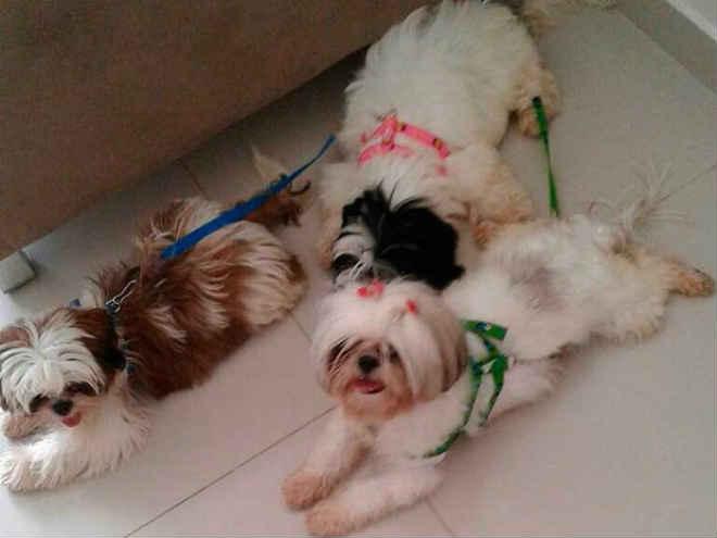 Homem que sumiu com 4 cães na BA é preso e polícia recupera animais