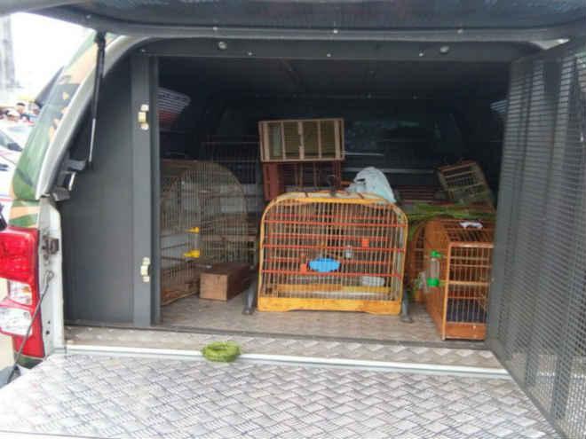 Polícia apreende 65 aves durante operação em feira ilegal na Bahia