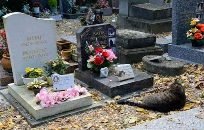 Projeto que prevê criação de cemitério para animais é aprovado e causa polêmica em Salvador, BA