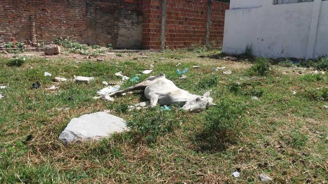 Cavalo é encontrado caído com sinais de maus-tratos em Senhor do Bonfim, BA
