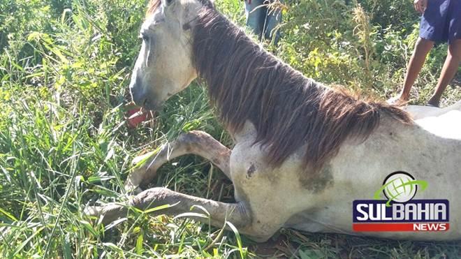 Animal que sofreu maus-tratos agoniza há dias nas ruas de Teixeira de Freitas, BA