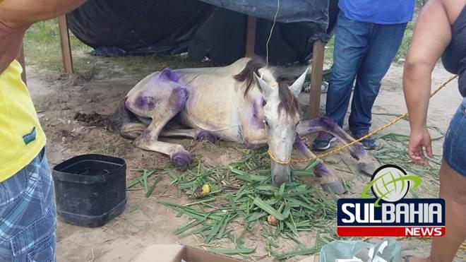 Cavalo que sofreu maus-tratos nas ruas de Teixeira (BA) recebe primeiros cuidados