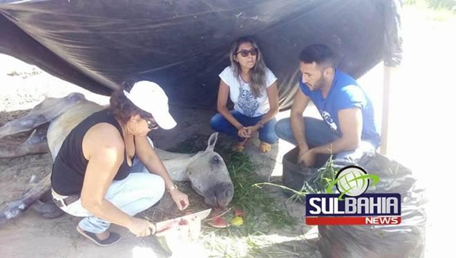 Crueldade: cavalo que sofreu maus-tratos nas ruas de Teixeira (BA) morre após resgate