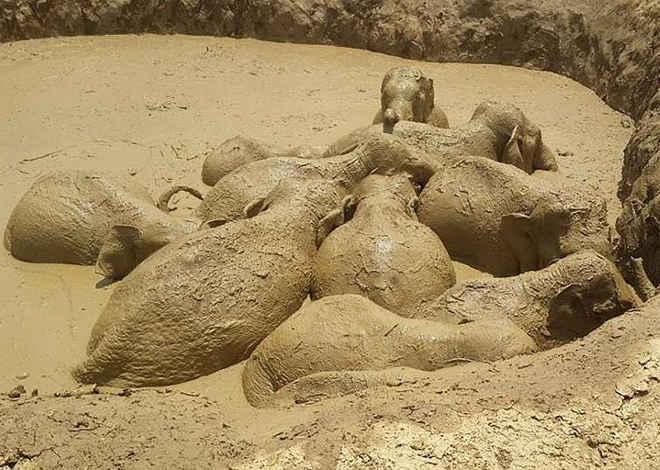 Elefantes ficam presos em lago feito por bomba