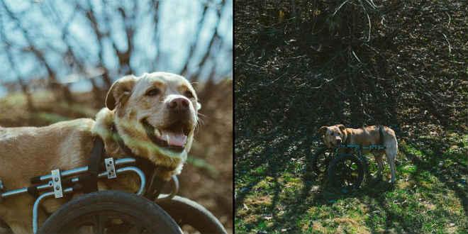 Cães com deficiência ganham nova chance de vida após adoção