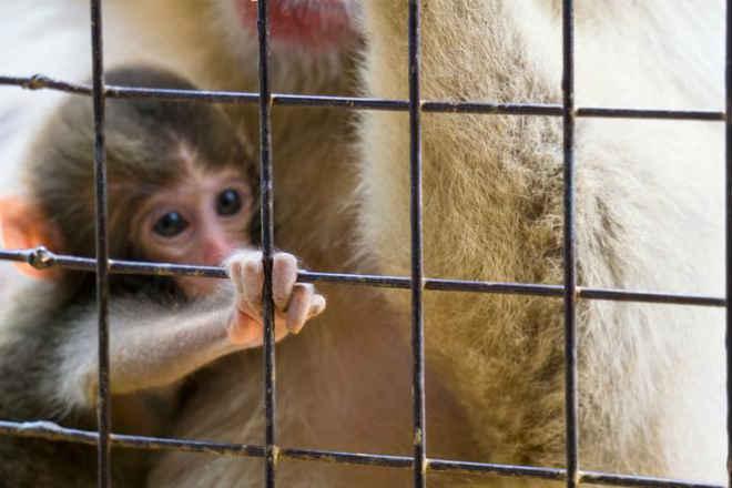Câmera escondida mostra maus-tratos e crueldade aparentes na instalação de testes em animais Baie D'Urfé