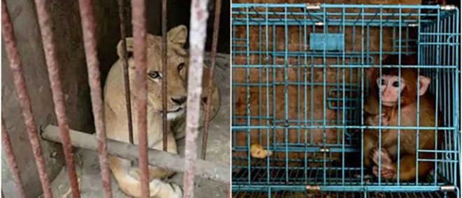China: Jardim zoológico encerrado devido às más condições de vida dos animais