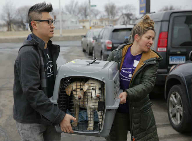 46 cachorros resgatados na Coreia do Sul chegam a Nova York