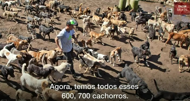 'Terra dos vira-latas': o santuário com uma centena de cães para cada humano