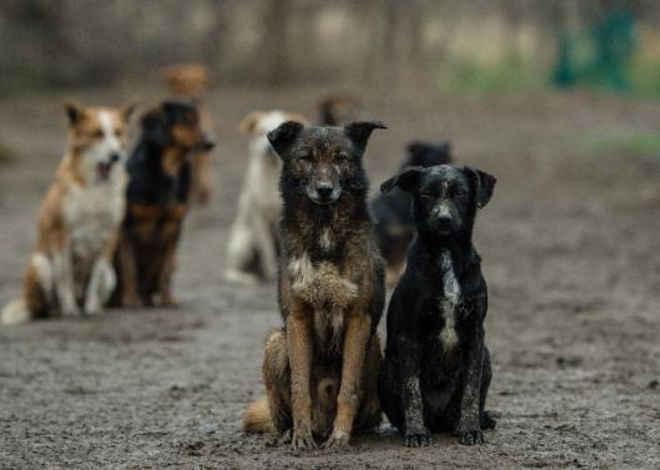 Câmara aprova controle de natalidade de cães e gatos por esterilização