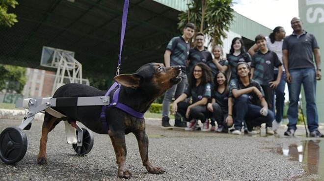 Estudantes do DF vencem torneio com próteses para animais