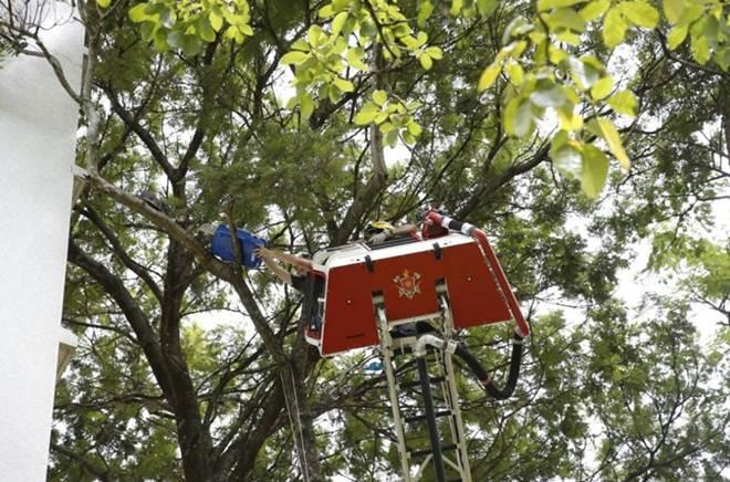 Após uma hora e meia, bombeiros resgatam gato preso em árvore no DF