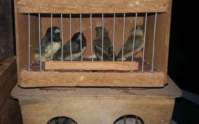 Suspeito por tráfico de animais joga gaiolas pela janela para fugir da polícia no DF